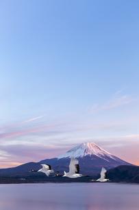 富士山と丹頂鶴CGの写真素材 [FYI04592051]
