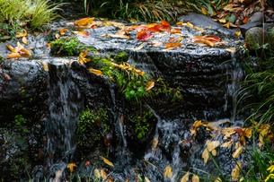 流れる小川と落葉した葉の写真素材 [FYI04592191]