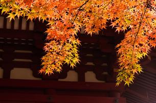 和風建築物と紅葉の写真素材 [FYI04592194]