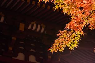 和風建築物と紅葉の写真素材 [FYI04592195]