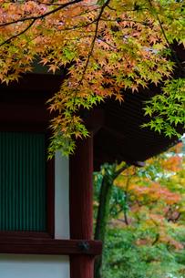 和風建築物と紅葉の写真素材 [FYI04592196]