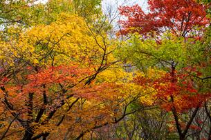 紅葉した樹々の写真素材 [FYI04592229]