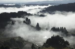 星峠の棚田の雲海の写真素材 [FYI04592422]