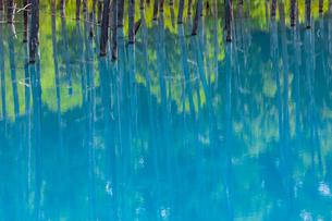 美瑛の白金青い池の写真素材 [FYI04592604]