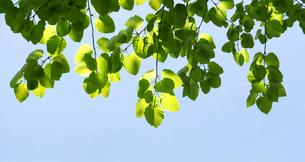 広葉樹の写真素材 [FYI04593307]