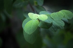 幻想的な新緑の葉の背景素材写真の写真素材 [FYI04593320]