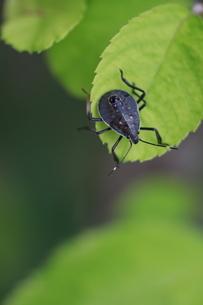 葉にとまる虫の写真素材 [FYI04593387]