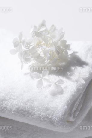 白いタオルと白いドライフラワーの写真素材 [FYI04593618]