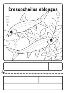 サイアミーズフライングフォックス 塗り絵 応募用紙のイラスト素材 [FYI04593830]