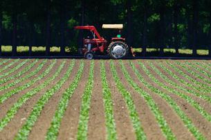 畑とトラクターの写真素材 [FYI04594067]