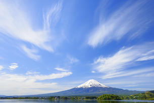 山梨県 初夏の河口湖より富士山と雲の写真素材 [FYI04594315]