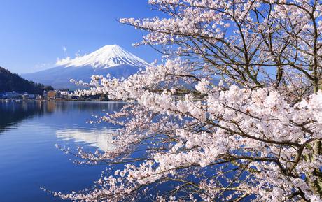 山梨県 河口湖の桜と富士山の写真素材 [FYI04594318]