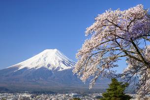 山梨県 富士吉田市より桜と富士山の写真素材 [FYI04594320]