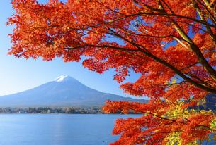 山梨県 河口湖の紅葉と富士山の写真素材 [FYI04594324]