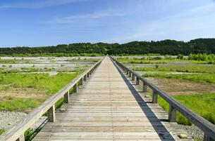 大井川にかかる蓬莱橋の写真素材 [FYI04595113]