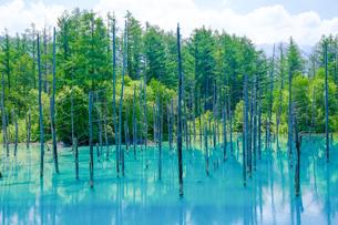 青い池の写真素材 [FYI04595135]