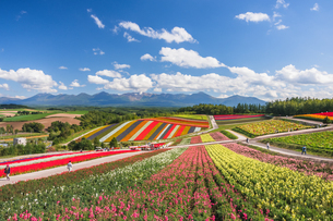 美瑛の花の丘の写真素材 [FYI04595298]