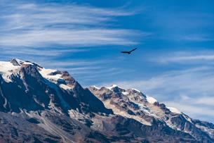 レアル山群・アンコウマ峰と空飛ぶコンドルの写真素材 [FYI04595347]
