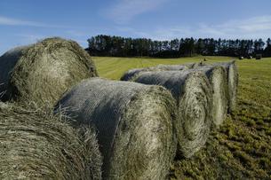 牧草の写真素材 [FYI04595411]