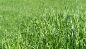 草原の写真素材 [FYI04595825]