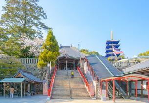 関西の神社仏閣 中山寺の写真素材 [FYI04596038]