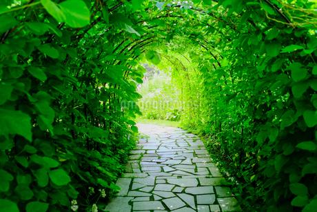 緑のトンネルの写真素材 [FYI04596076]