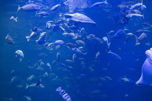 魚の群れの写真素材 [FYI04596164]