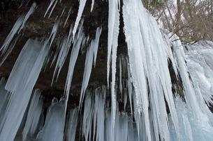1月 氷瀑の世界 -南牧(みなみまき)村の湯川渓谷-の写真素材 [FYI04596364]