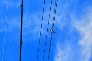 青空とツバメの写真素材 [FYI04596368]