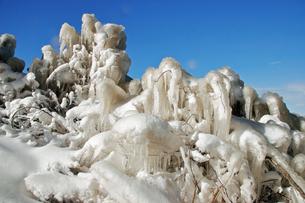 1月 猪苗代湖天神浜のしぶき氷の写真素材 [FYI04596548]