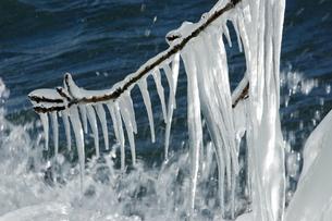 1月 猪苗代湖天神浜のしぶき氷の写真素材 [FYI04596551]