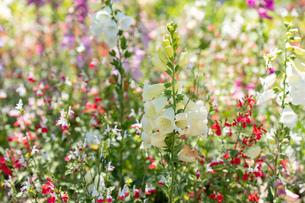 フラワーガーデンに咲く 夏の花の写真素材 [FYI04596555]