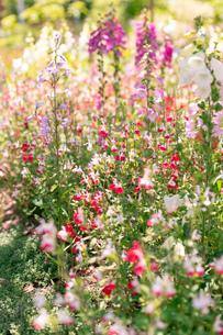 フラワーガーデンに咲く 夏の花の写真素材 [FYI04596556]