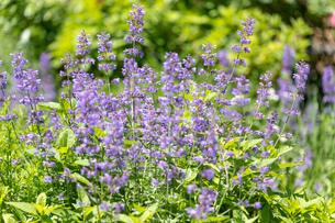 フラワーガーデンに咲く 夏の花の写真素材 [FYI04596560]