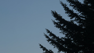木のシルエットの写真素材 [FYI04596570]