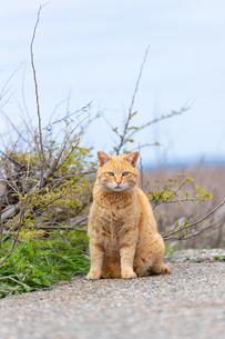 砂利道にたたずむチャトラ猫の写真素材 [FYI04596724]
