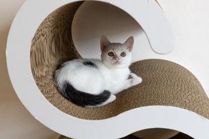 爪とぎの裏を見上げる子猫の写真素材 [FYI04596766]