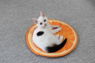 マットで横になる子猫の写真素材 [FYI04596776]
