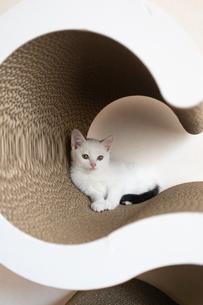 爪とぎの中でくつろぐ子猫の写真素材 [FYI04596796]