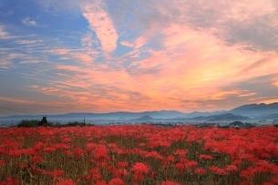 朝焼けの大和三山と彼岸花の写真素材 [FYI04596801]