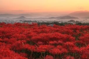朝焼けの大和三山と彼岸花の写真素材 [FYI04596802]
