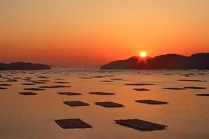 朝日と牡蠣いかだの写真素材 [FYI04596805]