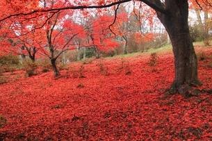 榛原鳥見山公園 紅葉風景の写真素材 [FYI04596813]