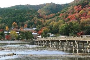 嵐山の紅葉と渡月橋の写真素材 [FYI04596855]
