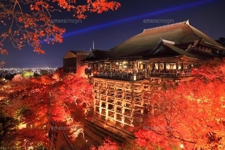 紅葉の清水寺のライトアップの写真素材 [FYI04596882]