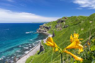 エゾカンゾウ咲く神威岬の写真素材 [FYI04596994]