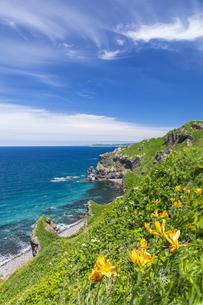 エゾカンゾウ咲く神威岬の写真素材 [FYI04596995]