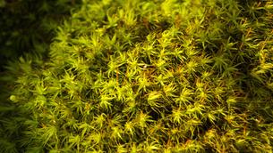 苔の写真素材 [FYI04597136]