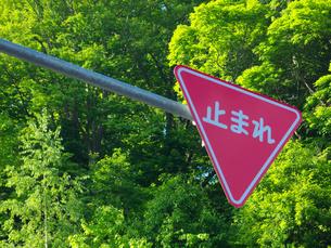 道路標識の写真素材 [FYI04597153]