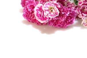カーネーションの花束の写真素材 [FYI04597261]